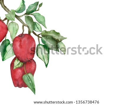 Watercolor hand painted composition branch with red apple friuts and green leaves, fresh summer illustration.