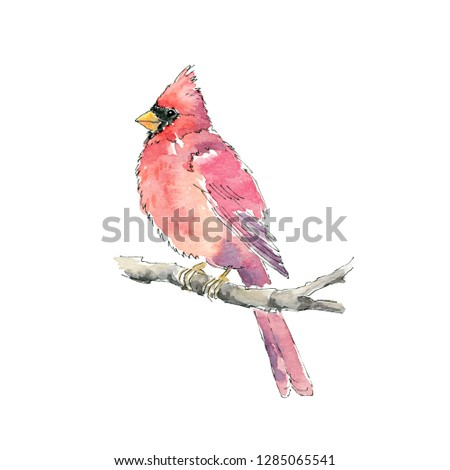 Watercolor hand painted illustration. Red cardinal bird isolated on white background. #1285065541