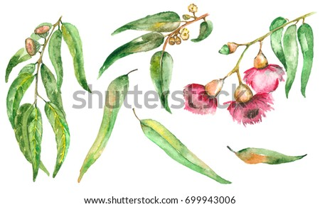 Watercolor hand painted set with eucalyptus leaves and branches, flower and branch. Botanical illustration isolated on white background.