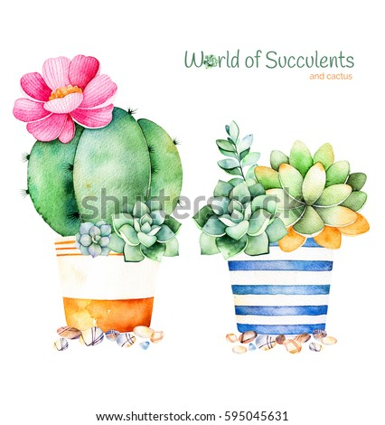 Watercolor handpainted succulent plant in pot and pebble stone.Watercolor clipart,individual flower pot isolated on white background.Perfect for your project,cover,wallpaper,pattern,gift paper,wedding
