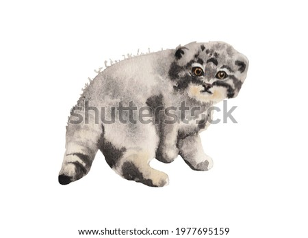 Watercolor illustration.  Baby Pallas' cat, wild cat isolated on white background.  For postcards, holidays Foto d'archivio ©