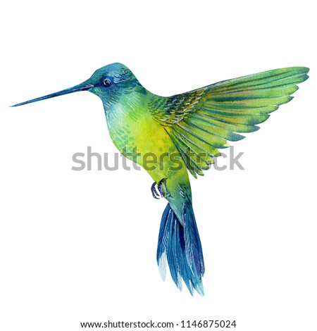 watercolor illustration, beautiful tropical bird, hummingbird in isolated white background