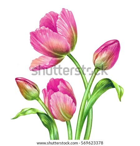 Stock Photo watercolor illustration, botanical art, fresh spring tulips, floral background, beautiful bouquet of wild flowers