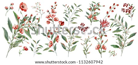 Watercolor illustration. Botanical collection of wild and garden plants. Set: leaves flowers, branches, herbs and other natural elements. All drawings isolated on white background. Red flower.