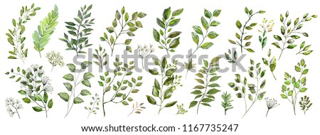 Watercolor illustration. Botanical collection of wild and garden plants. Set: leaves, flowers, branches, herbs and other natural elements.Green grass isolated on white background.