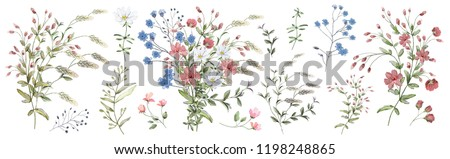 Watercolor illustration. Botanical collection of wild and garden plants. Set: leaves, flowers, branches, herbs and other natural elements. Bouquet of wild flowers.