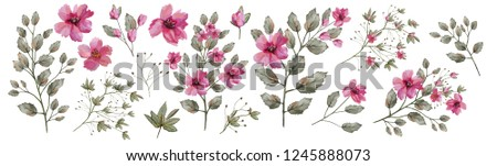 Watercolor illustration. Botanical collection of wild and garden plants. Set: leaves, pink flowers, branches, herbs and other natural elements.