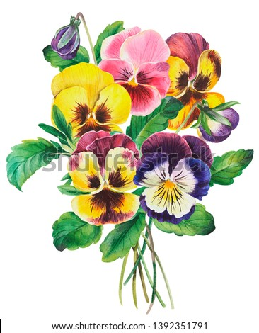Watercolor illustration bouquet of colourful pansies