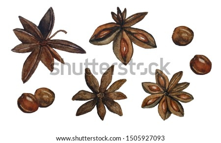watercolor illustration brown dried anise stars Illicium verum spice used for mulled spiced wine Chinese seed badian for Christmas winter season celebration food menu cooking realistic organic healthy