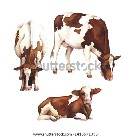 Watercolor illustration. Cows isolated on white background. Farm animals