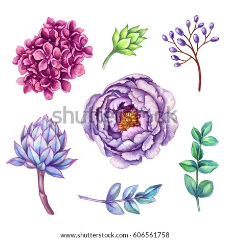 watercolor illustration, floral clip art set, wild flowers collection, bouquet design elements, isolated on white background