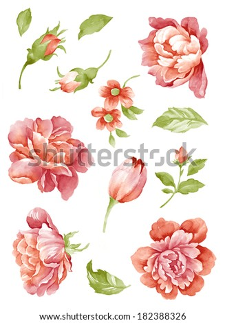watercolor illustration flower set in simple background