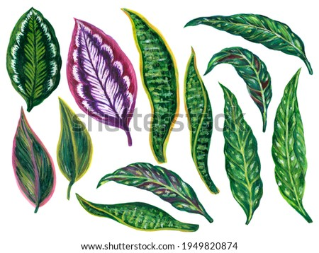 Watercolor illustration gouache  Botanical leaves collection tropical houseplants elements hand painted