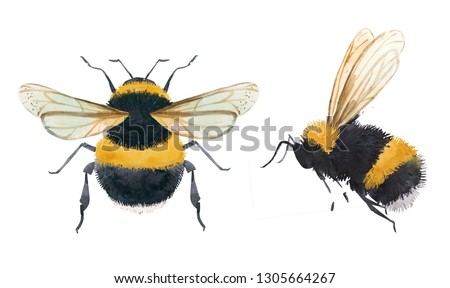 Watercolor illustration of a bumblebee, bee on a white background Stock photo ©