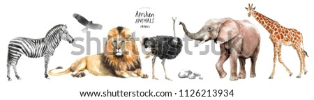 watercolor illustration of African animals: zebra, lion, ostrich, elephant, giraffe, eagle, southern  and stones, a set of drawings from the hands of animals in the zoo, isolated on white background