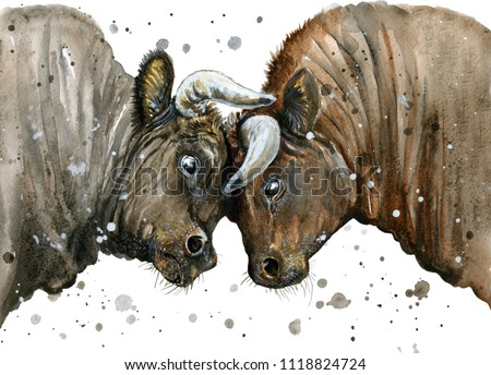 Watercolor illustration of an angry bulls