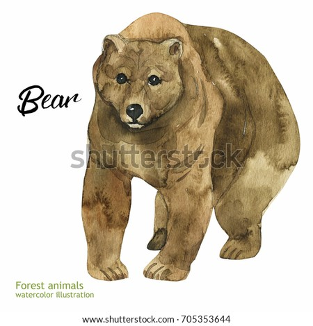 Watercolor illustration of an animal. Forest Fauna. Bear.