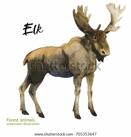 Watercolor illustration of an animal. Forest Fauna. Elk.