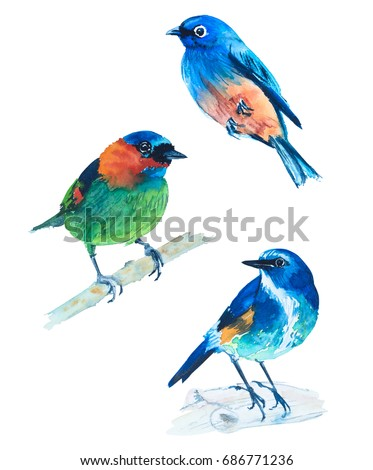Watercolor illustration of exotic birds of the world