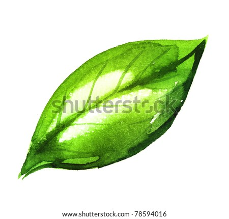 Watercolor illustration of green leaf