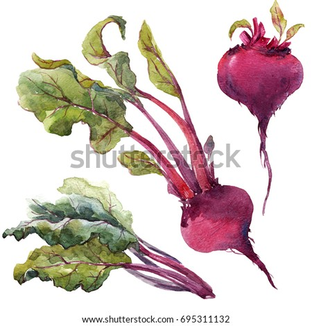 Watercolor illustration of root beet, leaves of chard, set of vegetables