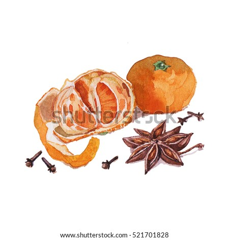 Watercolor illustration of the mandarins with the vanilla flower and cloves on the white background.