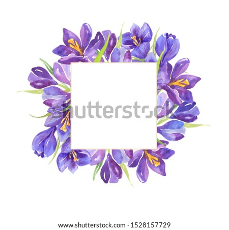 Watercolor illustration. Purple crocuses, spring flowers. Composition of watercolor flowers. Square. Wedding invitation cards. Postcard. #1528157729