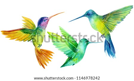 watercolor illustration, set beautiful tropical bird, hummingbirds in isolated white background