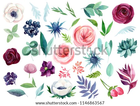 watercolor illustration, set of abstract flowers, plants, berry leaves on white background, roses, anemones, succulent eucalyptus, hellebore, beautiful bouquet of flowers