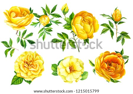 Watercolor illustration,  set of branches, flowers, buds and leaves, bouquet of flowers, yellow roses, on an isolated white background. Botanical painting, hand drawing