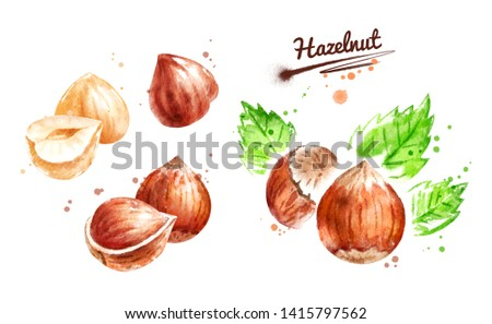 Watercolor illustration set of hazelnut, peeled and unpeeled with leaf and paint smudges and splashes. Foto d'archivio ©
