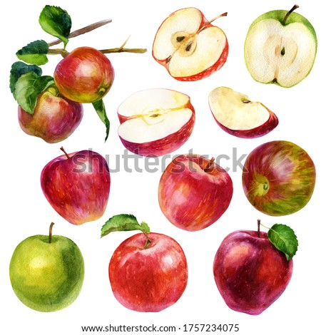 Watercolor illustration, set. Watercolor red apple, green apple, apple with a leaf, pink red-green apple, two apples on a branch with leaves, different halves and slices of apples.