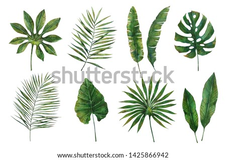 Watercolor illustration.Tropical leaves collection.Exotic palm leaves,philodendron leaves,dypsis lutescens leaves,banana leaves.Perfect for wedding invitations,prints,postcards,posters.