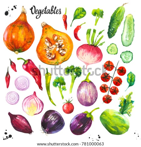 Watercolor illustration with farm grown products. Vegetables set: kohlrabi, cabbage, cucumber, tomato, cabbage, onion, pumpkin, cucumber, spinach, pepper. Fresh organic food.