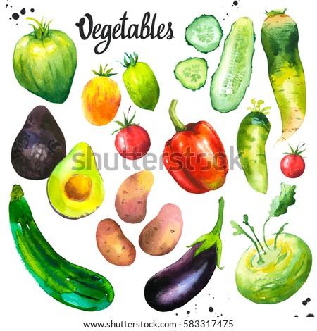 Watercolor illustration with farm grown products. Vegetables set: tomato, eggplant, cucumber, zucchini, peppers, avocados, cauliflower, potatoes, turnips. Fresh organic food.