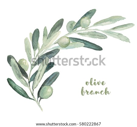 Watercolor illustration with olives sprig branch