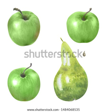 Watercolor illustration with  riped  green apples and pear. Harvest crop. Could be used for menu, farm markets, banner, prints.