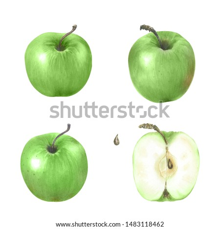 Watercolor illustration with  riped  green apples. Harvest crop. Could be used for menu, farm markets, banner, prints.