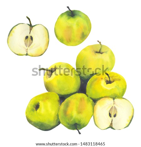 Watercolor illustration with  riped yellow apples. Harvest crop. Could be used for menu, farm markets, banner, prints.