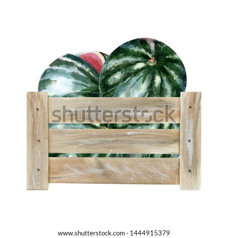 Watercolor illustration with wooden crate with riped watermelons. Could be used for menu, farm markets, banner, prints.
