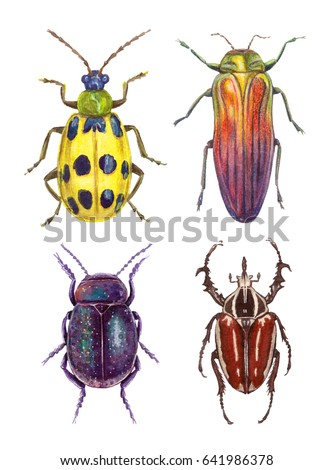 watercolor illustrations insects - bugs. hand painting, isolated elements.