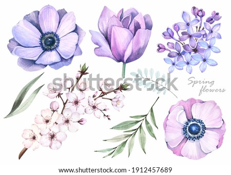 Watercolor illustrations.Spring flowers set on white background.  Anemones,  purple lilacs, cherry blossoms. Stock photo ©