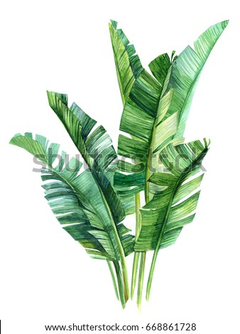 watercolor illustrations tropical palm leaves, isolated on white background
