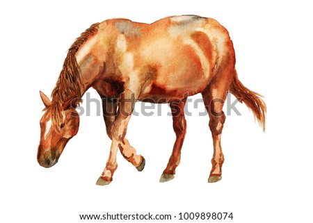Watercolor image of red horse on white baclground