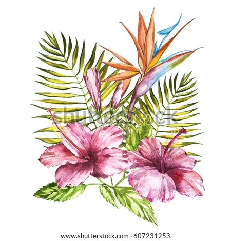 Watercolor isolated illustration of a pink hibiscus and leaves, Strelitzia reginae, tropical flower composition on a white background
