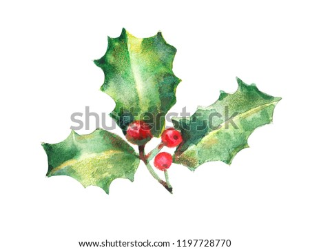 watercolor isolated illustration of holly, drawing by hand branches of berries with paints, decor for New Year and Christmas