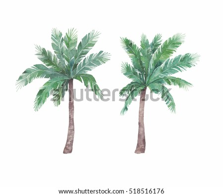 Watercolor isolated palm tree