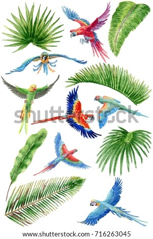 Watercolor isolated set with parrots and palm leaves on white background. Isolated set.
