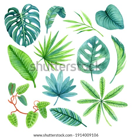 Watercolor leaves of lush nature of rainforests. Hand-painted tropical set, isolated on white background. Exotic illustrations perfect for for posters, cards, invitation and other summer designs.