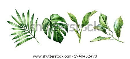 Watercolor leaves set. Tropical citrus, palm, monstera leaves. Exotic tree branches isolated on white. Collection of jungle green plants. Realistic detailed botanical illustration